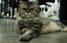 Felix is king of the shop when he comes to stay